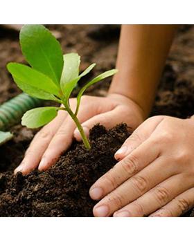 Identidad gráfica de la Plantación simbólica en conmemoración al Día del Árbol. A realizarse el 11 de julio, a las 10:00 horas, en el Centro Universitario de Ciencias Biológicas y Agropecuarias (CUCBA)