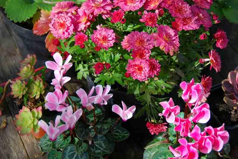 Estudian perfiles moleculares de plantas ornamentales y for 2 plantas ornamentales
