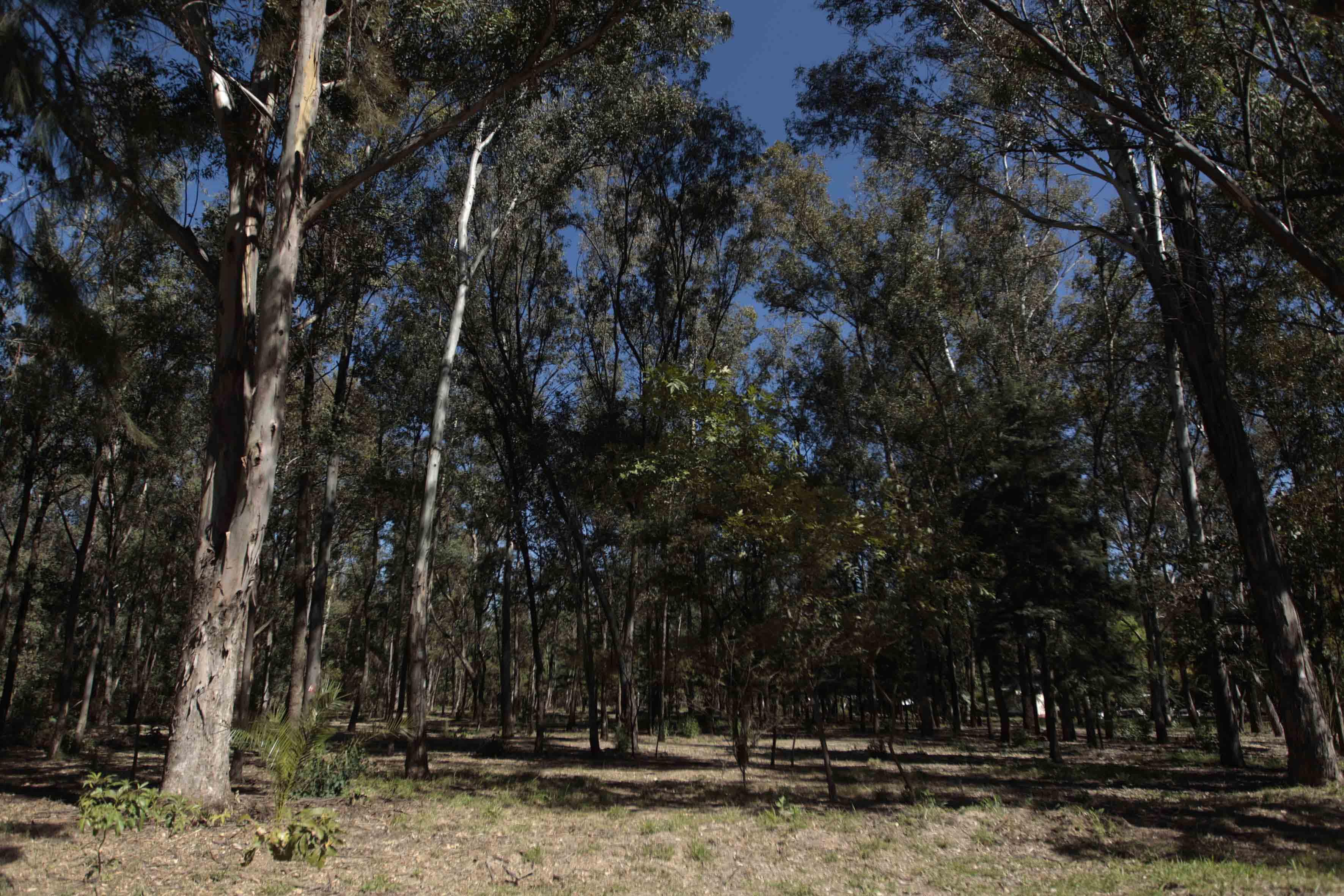 Bosque de los colomos