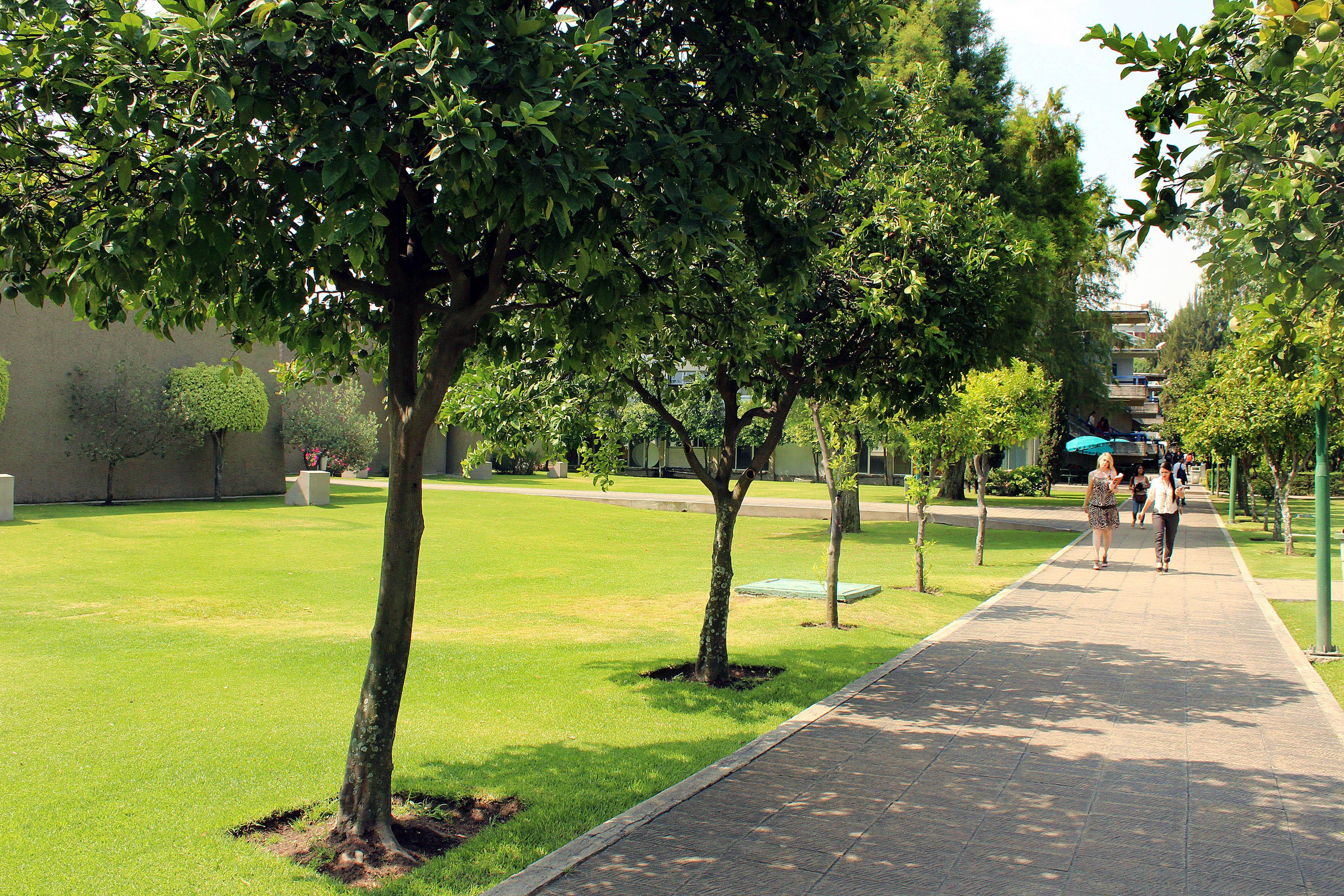 El cucea es un vivero gigante universidad de guadalajara for Jardines verdes