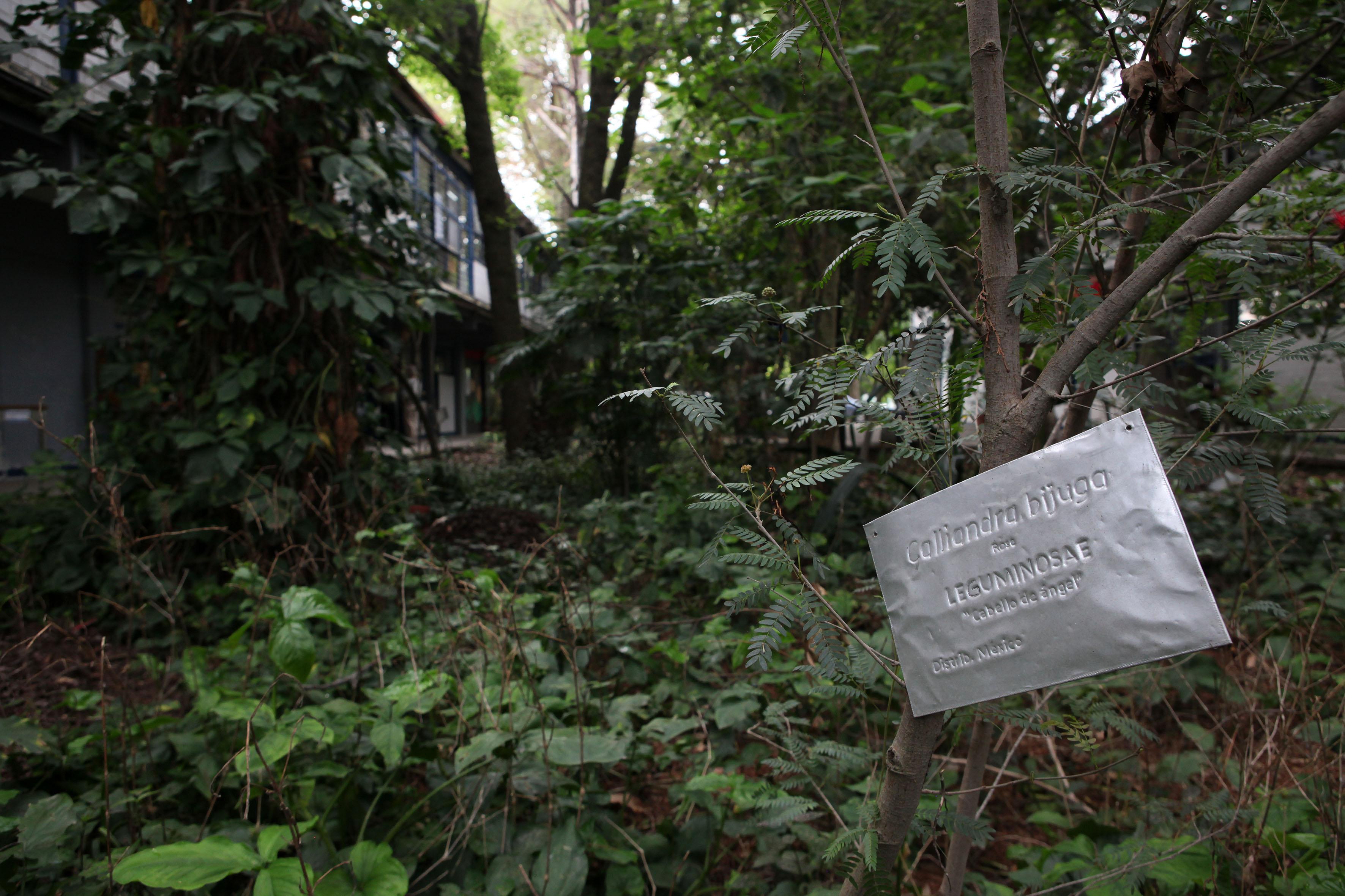"""Letrero  con información de un árbol llamado Calliandra Bijuga """"Cabello de Angel"""""""