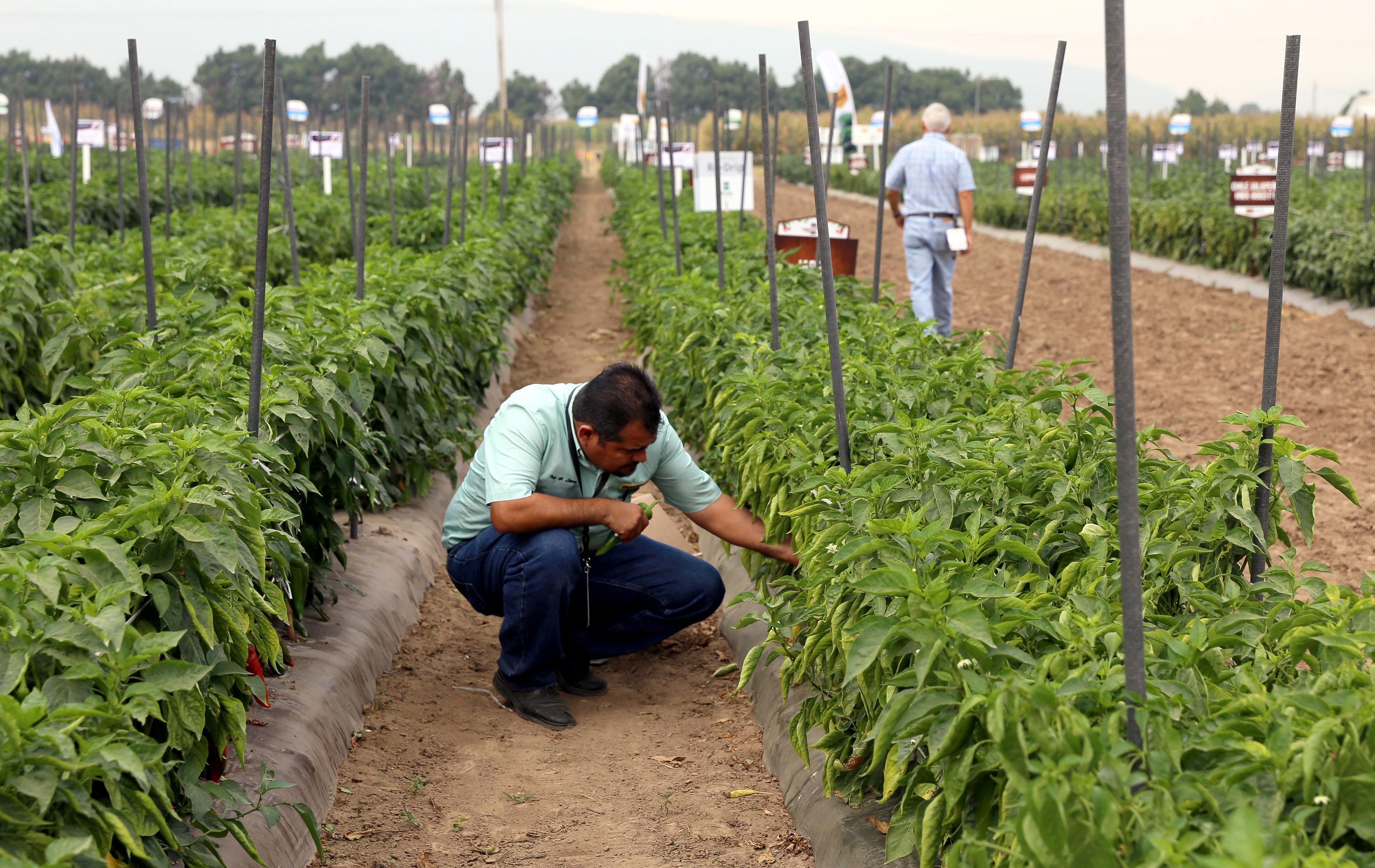 Cultivar legumbres y hortalizas en casa mejora la for Cultivar vegetales en casa