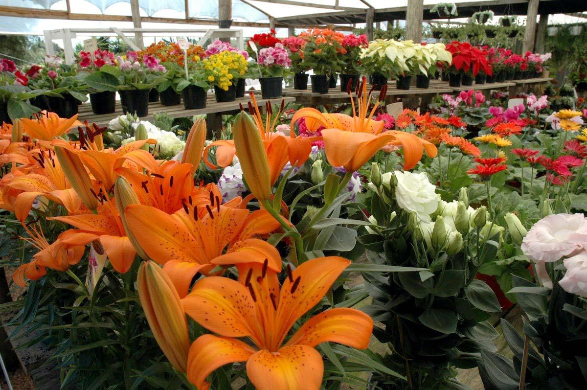 Flores negocio rentable para m xico sobre todo por for Vivero online mexico