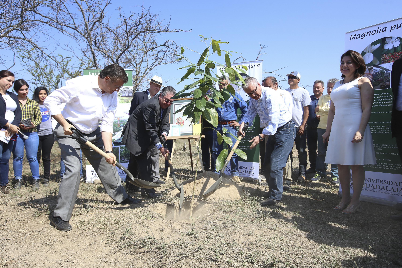 Rector General de la UdeG, maestro Itzcóatl Tonatiuh Bravo Padilla, en compañía del Rector del CUCBA y Presidente Municipal de Guadalajara, licenciado Juan Enrique Ibarra Pedrosa; colocando la primera planta en el Parque Botánico de la UdeG .