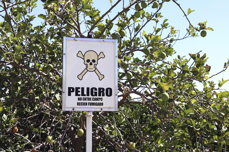 Letrero de advertencia de peligro por campo recien fumigado, enfrente de árbol de limón persa.