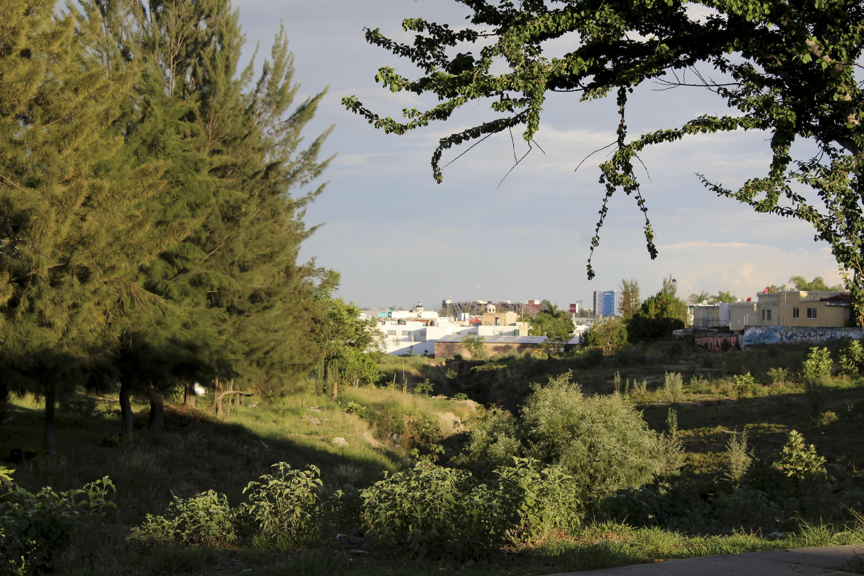 Vista de la colonia desde el bosque aledaño