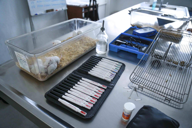 Ratones y equipo de laboratorio