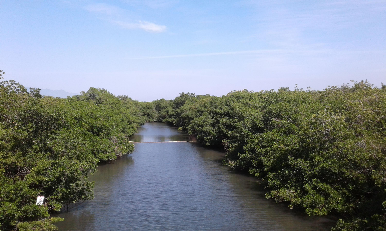 Área Natural Protegida del Estero El Salado