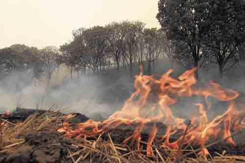 Fotografía de archivo de un incendio forestal