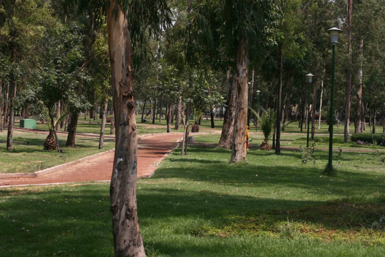 Área verde de un parque, en la Zona Metropolitana de Guadalajara (AMG)