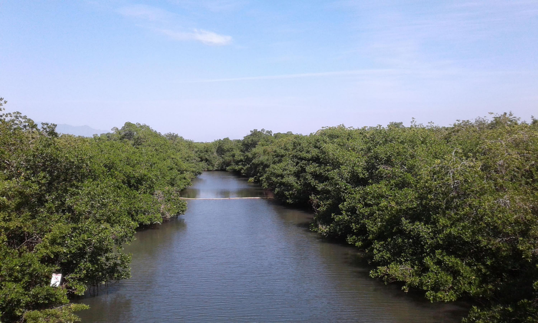 Área Natural Protegida del Estero El Salado, en Puerto Vallarta