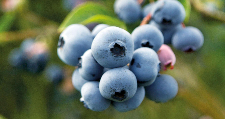 Apicultores y productores de berries y aguacates de la región Sur, crearon el Comité de Protección de Polinizadores del Estado de Jalisco