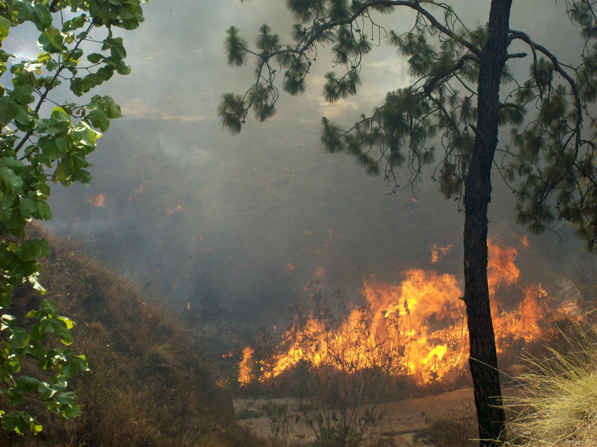 Incendio en el bosque