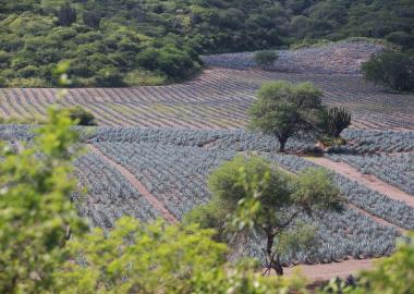 Paisaje rural que muestra la deforestación y el cambio de uso de suelo