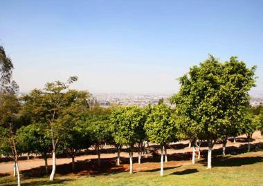 Paisaje arbolado fuera de la Zona Metropolita de Guadalajara