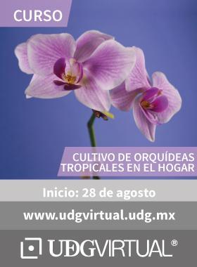 Cartel alusivo y de invitación al curso de Cultivo de Orquídeas tropicales en el hogar; el cual inicia el 28 de agosto y se proporciona el enlace de UDGVirtual.